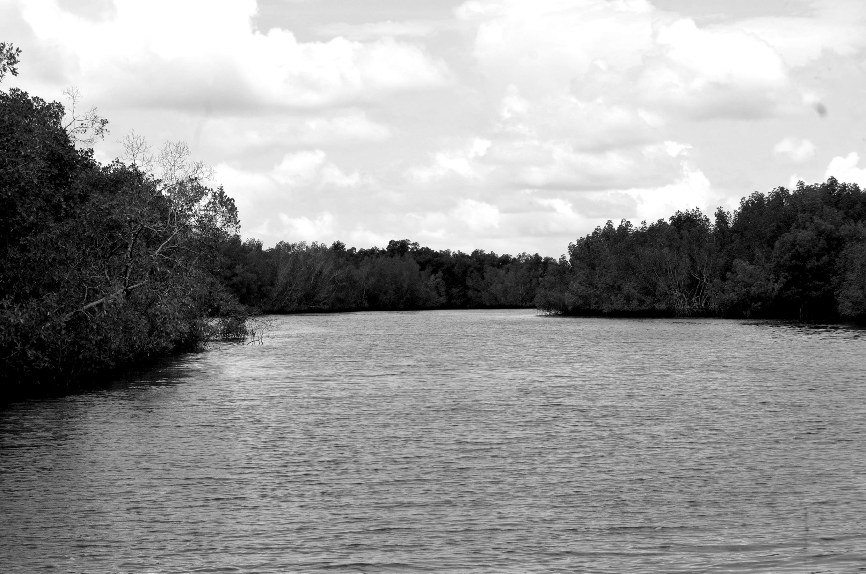 Parque natural do Rio Cacheu